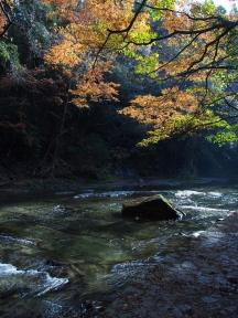 粟又の滝遊歩道 紅葉