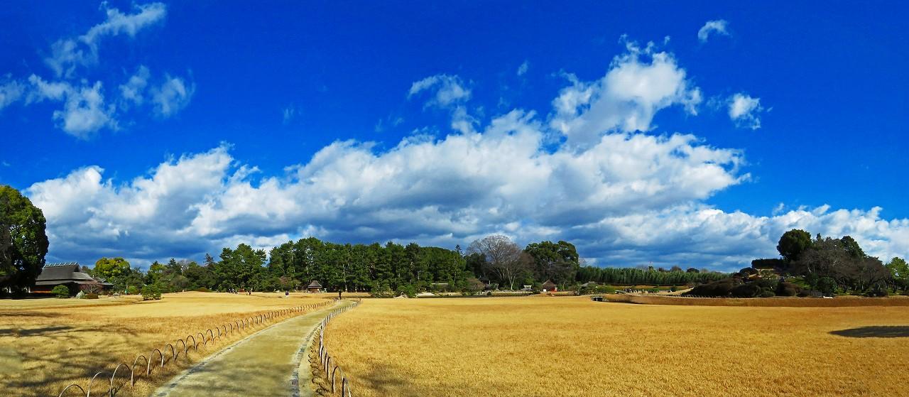 20170113 後楽園今日の冬芝の色に変わった園内ワイド風景 (1)