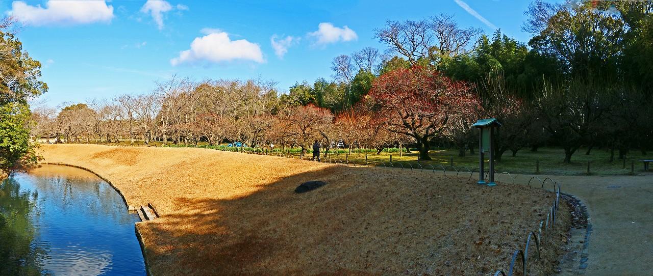 20170117 後楽園今日の園内梅林のワイド風景 (1)