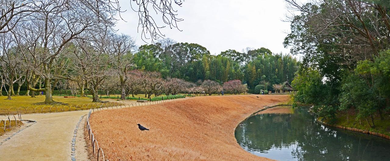 20170119 後楽園今日の午後の園内梅林と花交の池のワイド風景 (1)