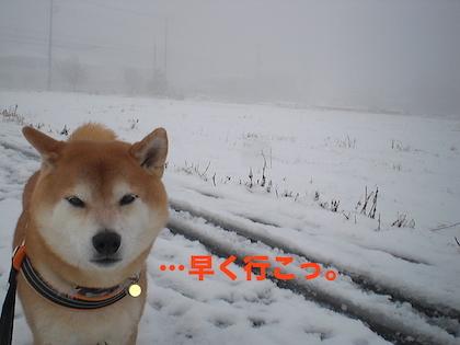 CIMG0072.jpg