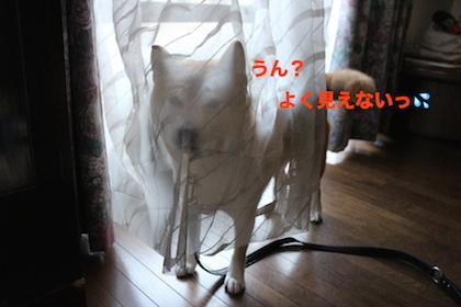 IMG_3857_2016122215525595b.jpg