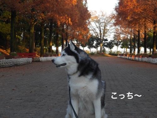 P1010739_Fotor.jpg