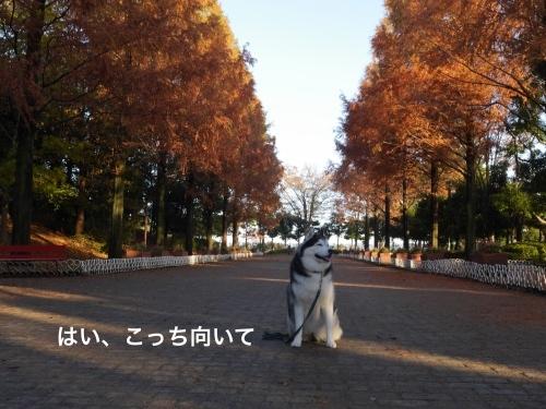 P1010799_Fotor.jpg