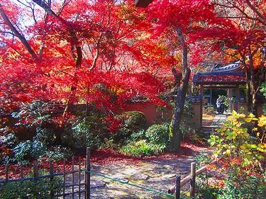 20161126京都 (24)