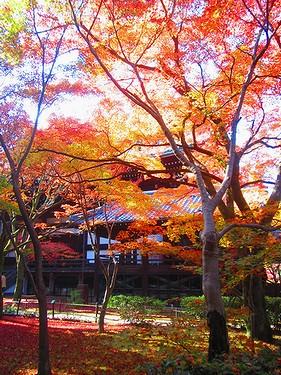 20161126京都 (30)
