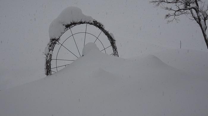 ライオンは雪の下