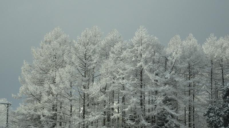 雪国の道3