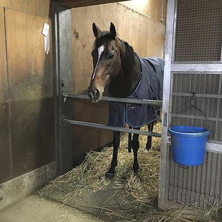 【有馬記念】キタサンブラックが有馬で四着以下になる可能性