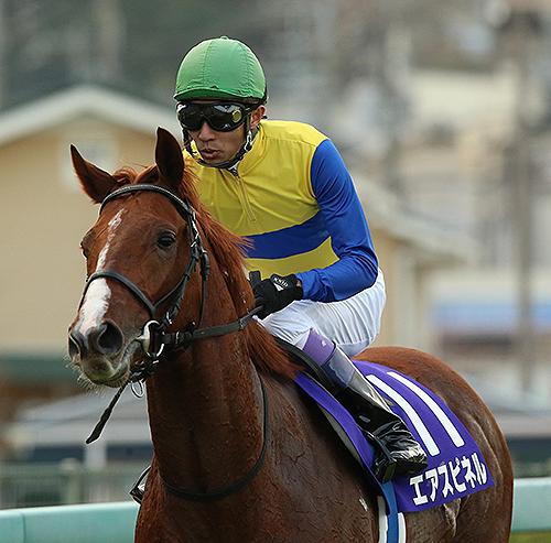 【競馬】エアスピネル、来年はユタカとマイル路線へ!始動戦は京都金杯