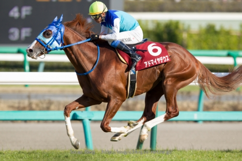 【有馬記念】アドマイヤデウス日経賞ぐらい走れれば足りる説