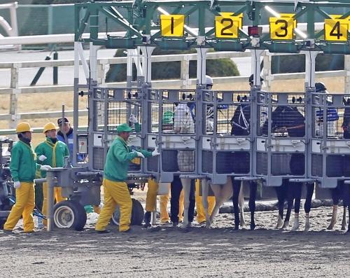 【競馬】ブチコ再びゲート再審査、前扉を破壊し出走停止処分