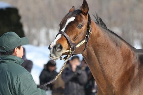 【競馬】非GⅠ馬で最強はどの馬?