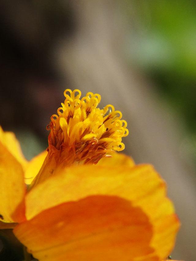 flower_in_f2.jpg