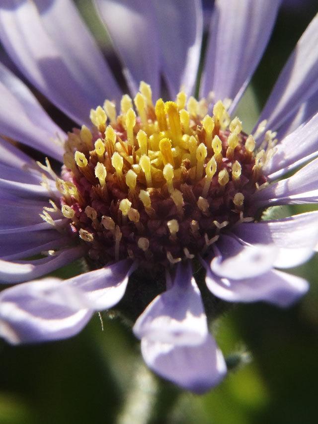 flower_in_f4.jpg