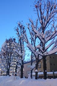 20161224大雪