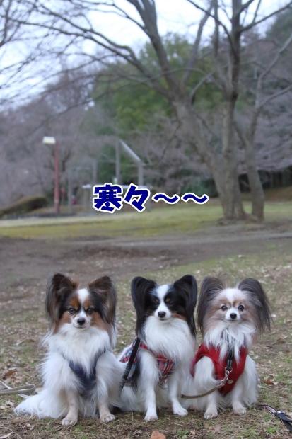 初 ふるさと公園00001691