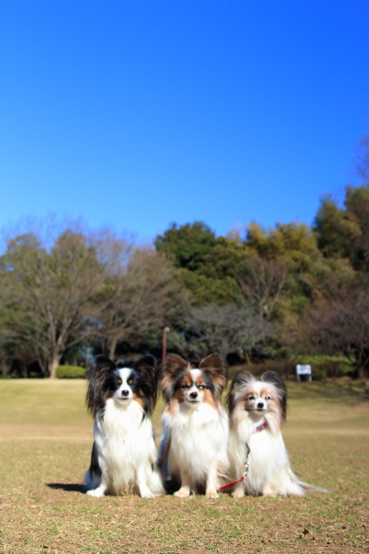 ふるさと公園 梅0015
