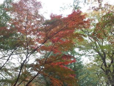 武蔵野 紅葉 蕎麦 温泉