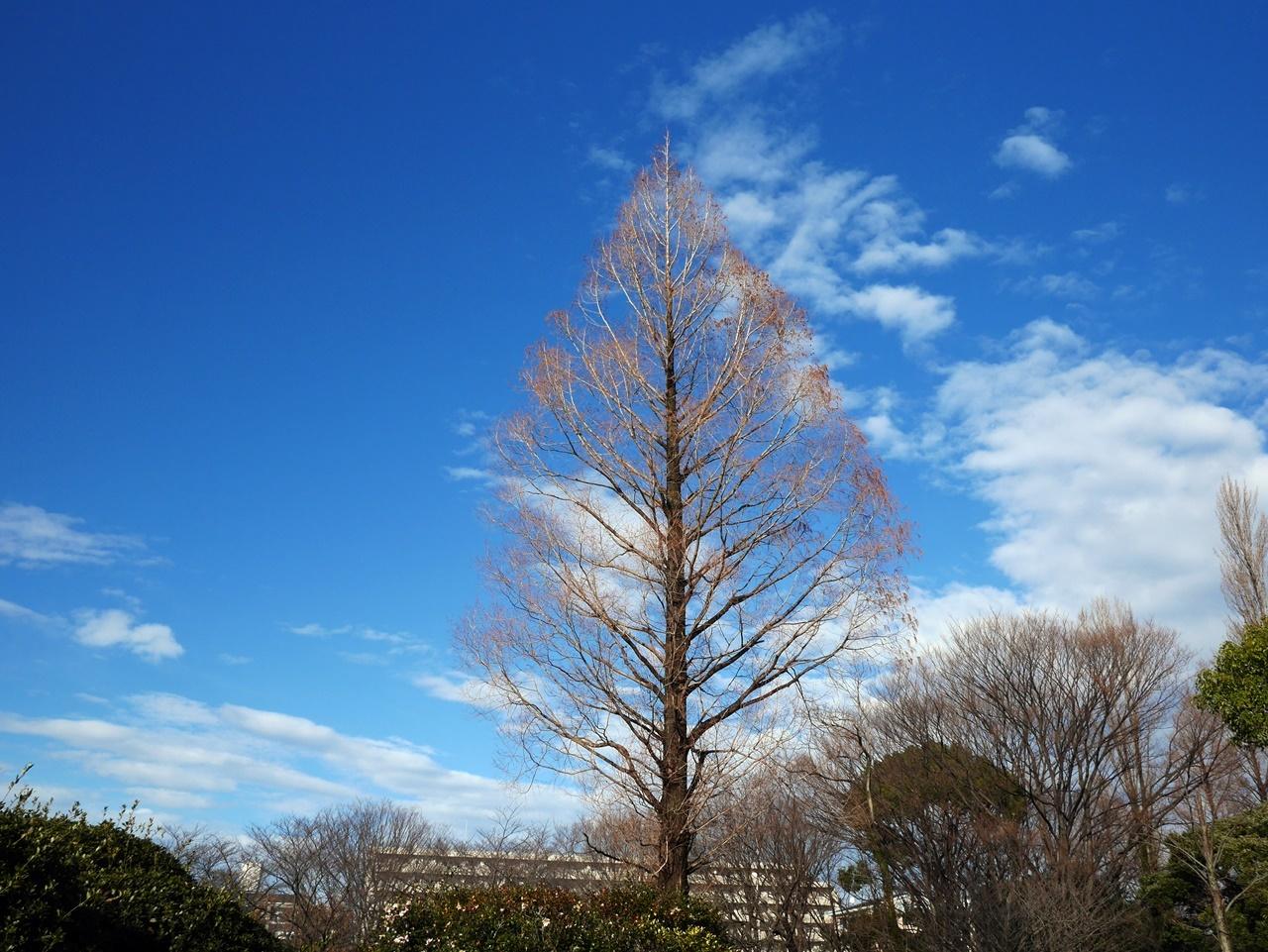 170109竹ノ塚-06
