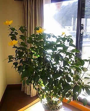 1月16日お花全体像