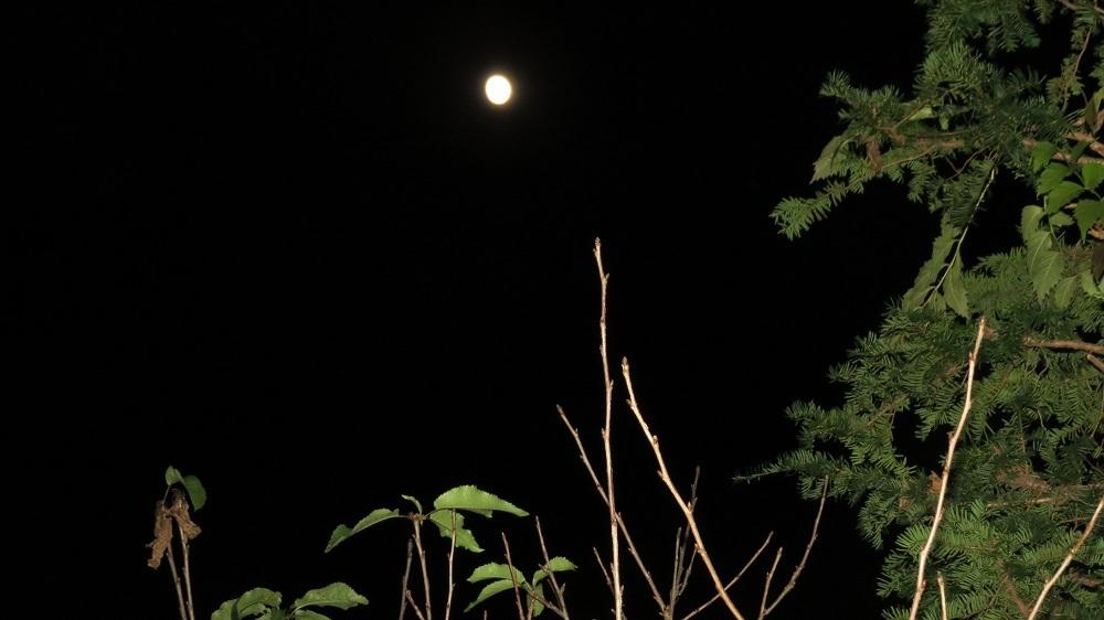 1止まり木に月IMG_8666