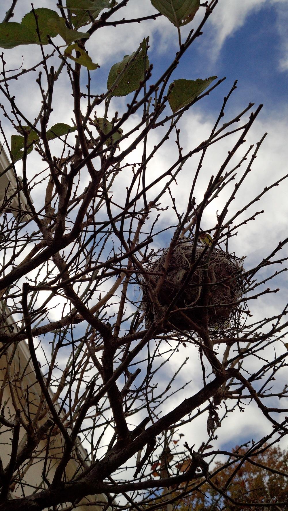 1鳥の巣android-20161128125049