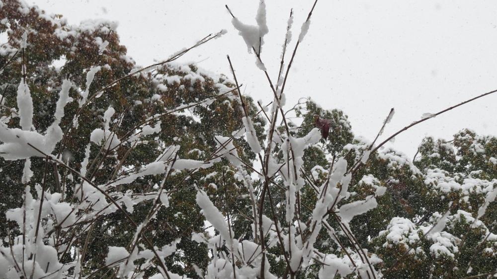 1雪1124IMG_9138