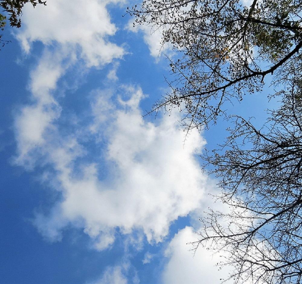 浮雲IMG_3238