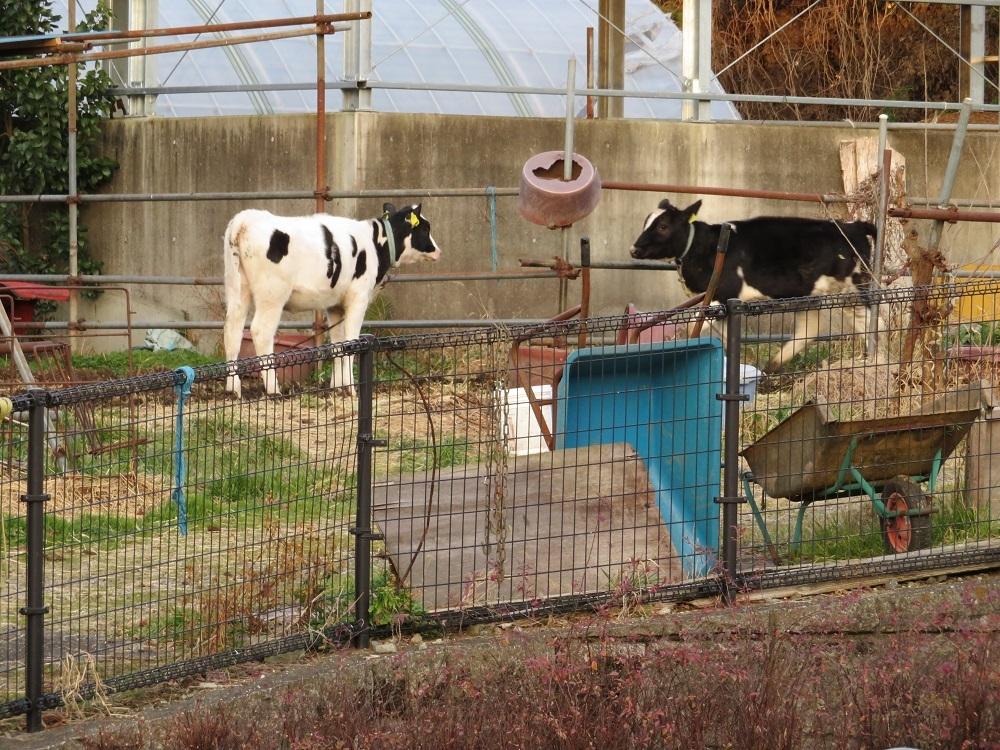 1牛関係IMG_0647
