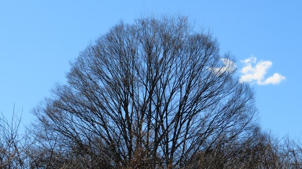 50トトロの木IMG_0711