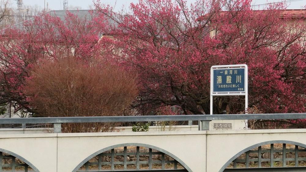32紅梅と船橋IMG_0842