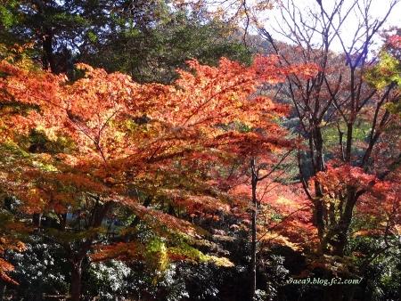 2016 11-26 岐阜公園の紅葉 2