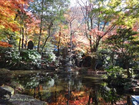 2016 11-26 岐阜公園の紅葉 4