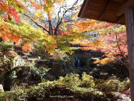 2016 11-26 岐阜公園の紅葉 6