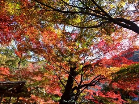 2016 11-26 岐阜公園の紅葉 8