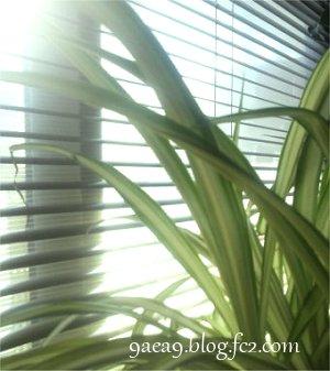 窓 と ブラインド