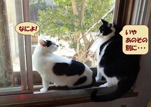 チョビ子・コテツ2