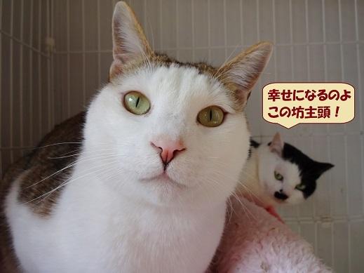 ボンボン・レナちゃん