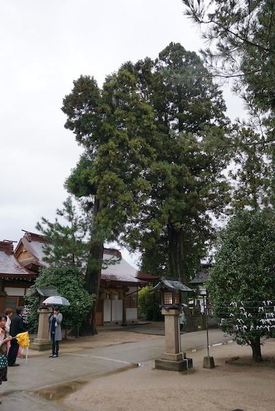 1119八重垣神社4