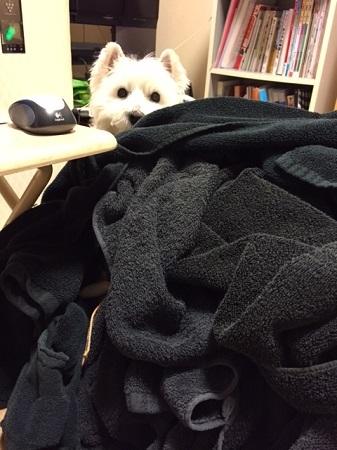 洗濯物 001