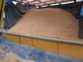 H29.1.12籾殻保管庫の様子①@IMG_0374