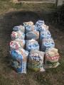 H29.1.24籾殻燻炭回収(14P)@IMG_0467