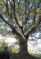 木登りには格好の木