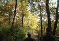 黄葉の山道