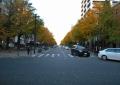 横浜公園から見た日本大通り
