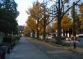 左は山下公園