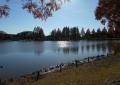 逆光の修景池