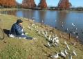 餌を待つ鳥たち