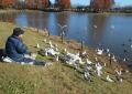 餌を撒くと鳥たちが一斉にざわめく